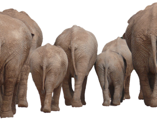 elephant-1049840_1280